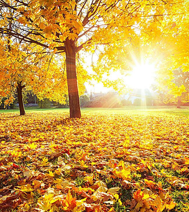 mùa thu lá vàng rơi !